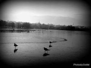 Grey winter day