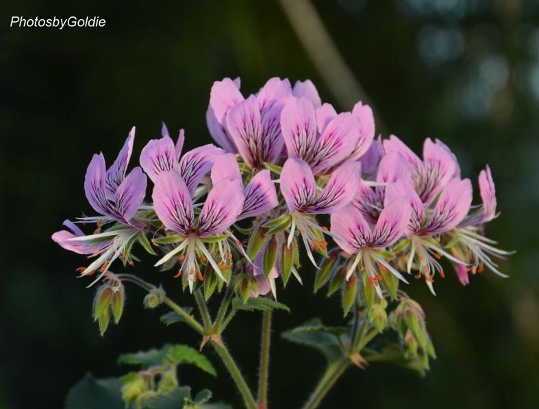 Purple tropical flowers1