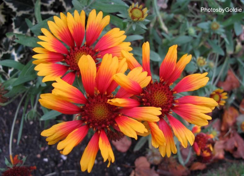 Autumn Flowers1