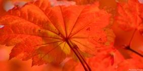 a-new-leaf
